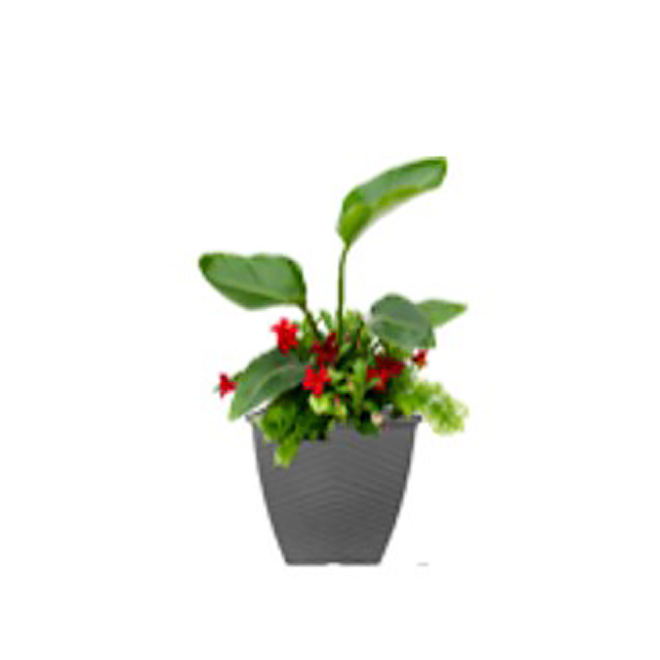 Annual Outdoor Planter - 5-Gallon Decorative Pot 970869
