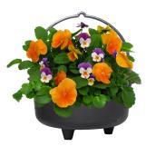 Jardinière de chaudron effrayant, Fernlea Flowers, couleurs assorties