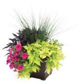 "Annual Plant - 10"" Pot"