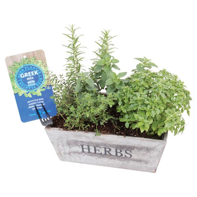 Fine Herbs - 15-in Vintage Pot