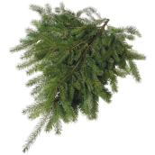 Devry Greenhouse - Natural Noble Fir Branches - 2 lb - Green