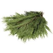 Branches naturelles en cèdre, Devry Greenhouse, 2 lb, vert