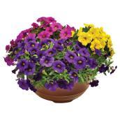 Arrangement de fleurs annuelles