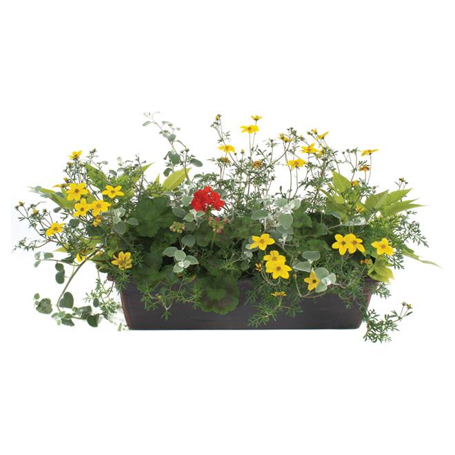 Jardinière de balcon, fleurs annuelles assorties, 24''