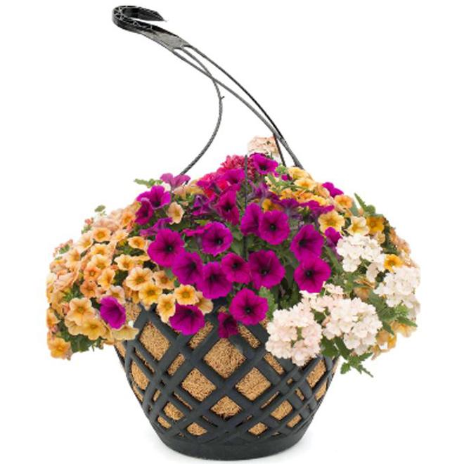 Panier suspendu d'annuelles avec fibre de coco, pot de 14 po, variété de couleurs