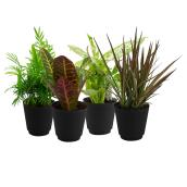 Assorted Foliage in 4-in Planter