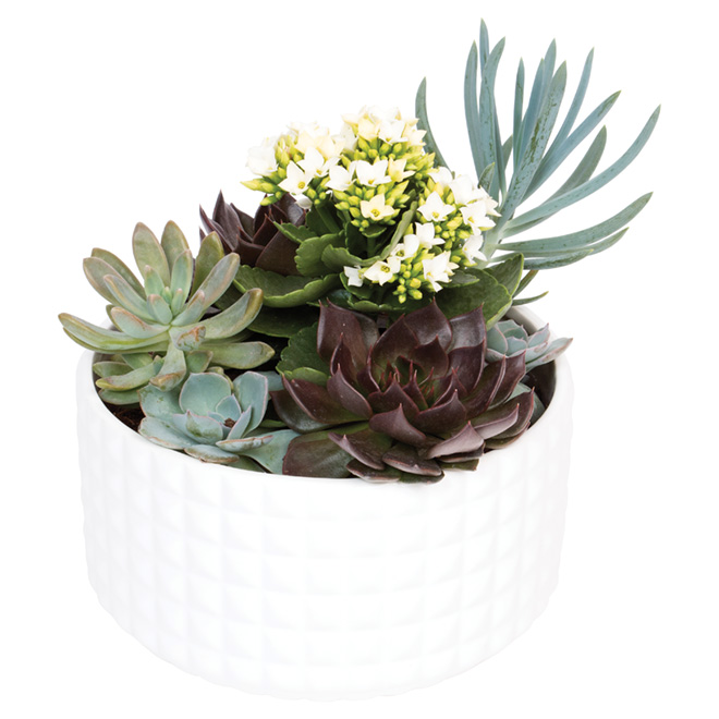 Devry Greenhouse - Succulents - 9-in Bowl - Assorted