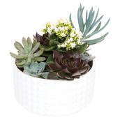 "Assorted Succulent - 9"" Bowl"