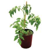 Légumes et fines herbes assortis, contenant de 1 gallon