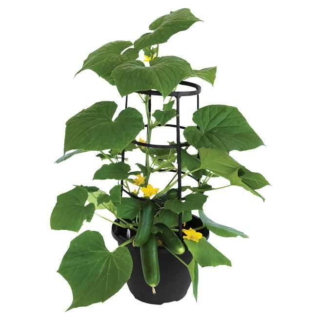 Assorted Vegetable with Cage - 10-in Pot