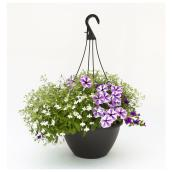 "Assorted Plant - 11"" Hanging Basket"