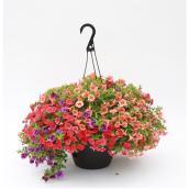Panier suspendu de fleurs d'autonme, 12'', assorti