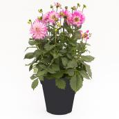 Devry Greenhouse - Assorted Planter - 11''