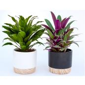 Devry Greenhouse - Indoor Plants in 4-in Decorative Pots