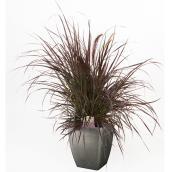 Devry Greenhouse Assorted Planter - 11-in Decorative Pot