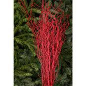 Cornouiller, Devry Greenhouse, bouquet, rouge