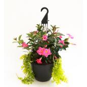 Devry Greenhouse Assorted Mandevilla - 12-in Hanging Basket