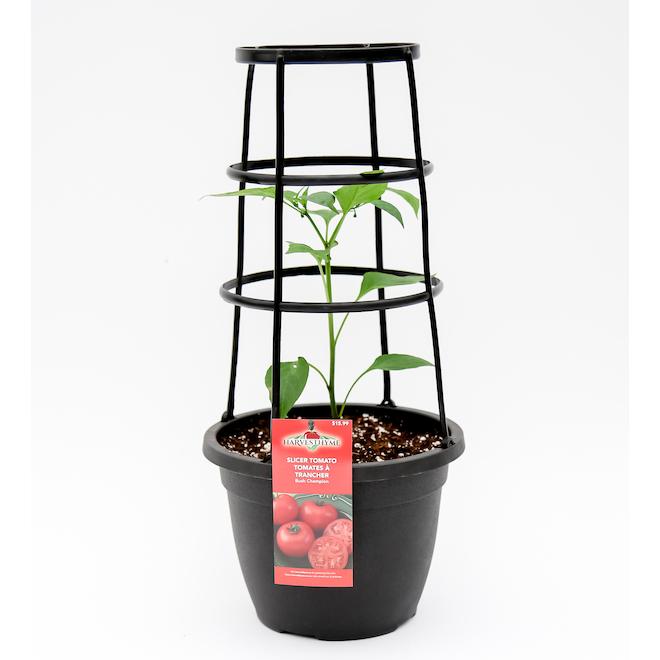 Jardinière de récolte instantanée 14 po