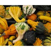 Assorted Gourds - Pack of 5
