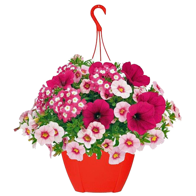 Hanging Basket - Annual Flowers - 10-in Pot