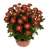 "Potted Chrysanthemum  - Fall Model - 6"" - Assorted Colours"