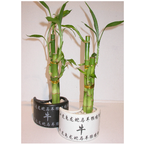 Westbrook Florale 3-Stem Bamboo in Ceramic Pot - 3.5""