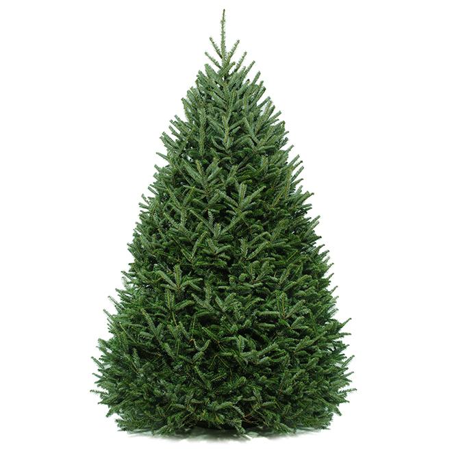 Balsam Christmas Tree - 6-8 ft - Green