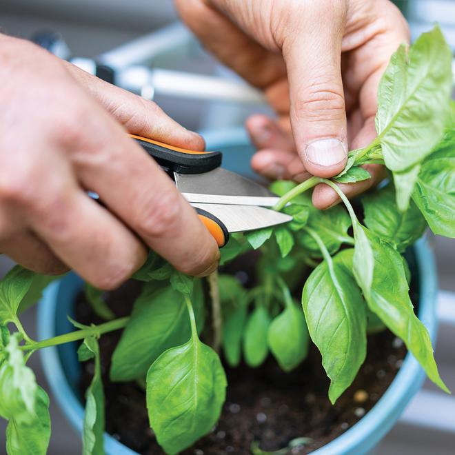 """Ciseaux pour herbes et légumes, acier inoxydable, 5"""""""