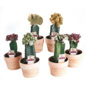 Plants - Coral Cactus