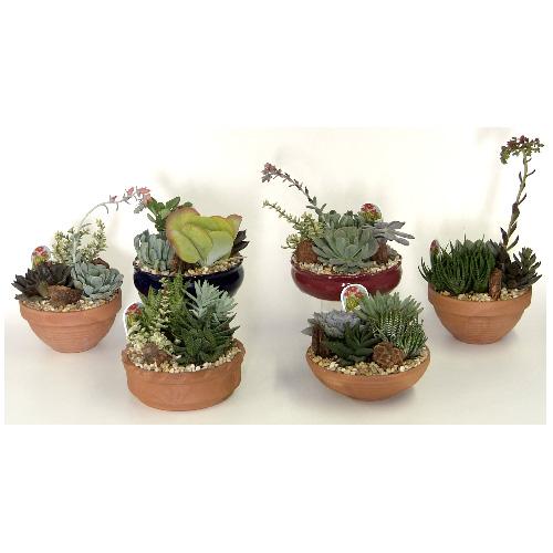 "Cactus and Succulent Garden - 8"" - Assorted"