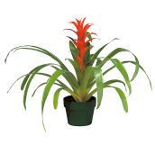 Plants - Bromeliad
