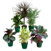Premium tropical plants - Assorted