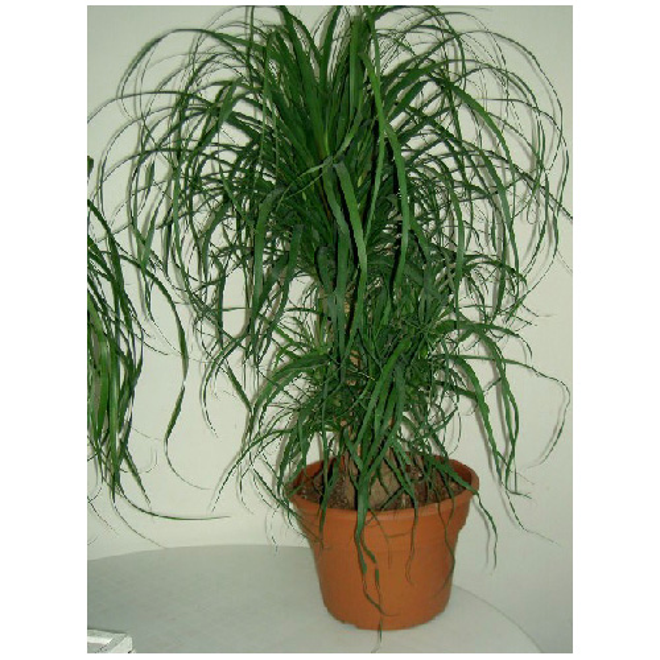 df499c2ba50 COSTA NURSERY Plants -