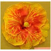 Standard Hibiscus