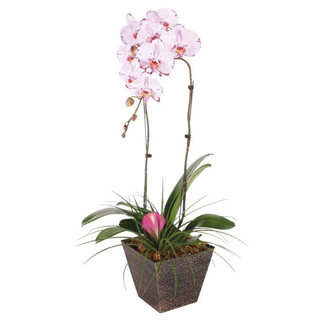 Orchidée «Bromelia»