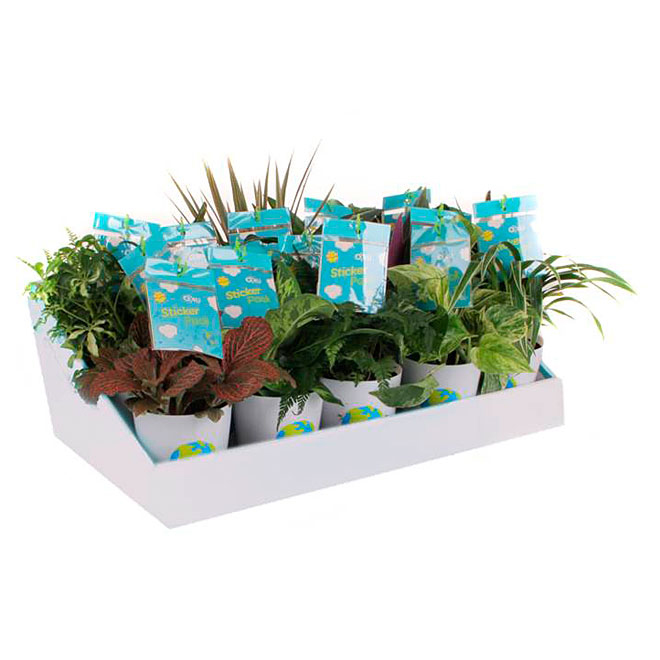 """Assorted Tropical Plant for Kids - 4"""" Cover Pot"""