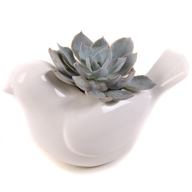 """Succulente en pot Sweet Tweet, 4"""", oiseau, blanc"""