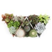 """Arrangement de cactus et succulentes, 8"""""""