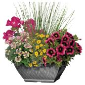 """Assorted Annuals - Table Center - 10"""""""