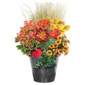 Pot patio, Serres Floraplus, plastique, annuelles, 12''