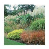 Plante grasse ornementale, 5 gallons, assortie