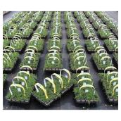 Cell Groundcover - Assorted Annuals - 10/Pack