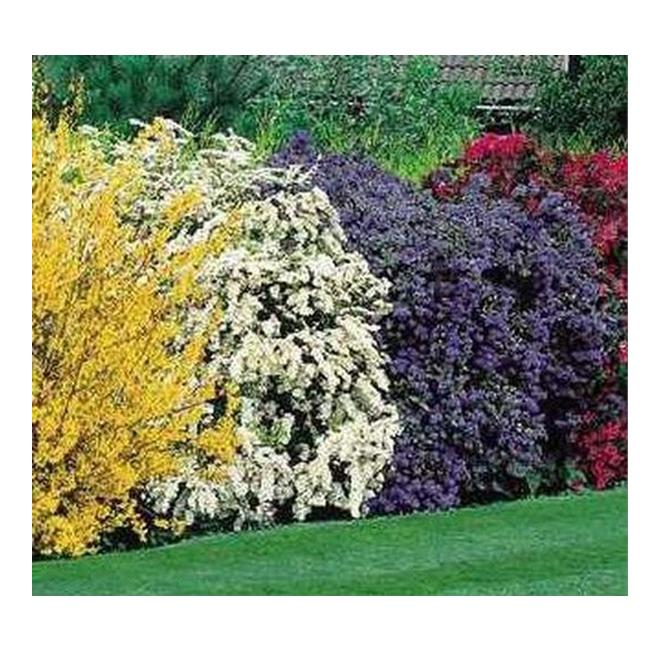 Arbuste floraux assortis, pot de 5 gal
