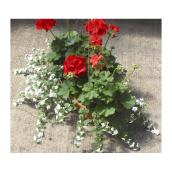 16'' Oval Window Box - Assorted Plants