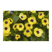 "Shade Garden - 3.5"" - Assorted Colours"