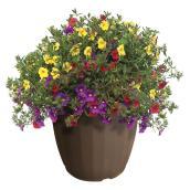Serres Floraplus - Patio planter - 12-in