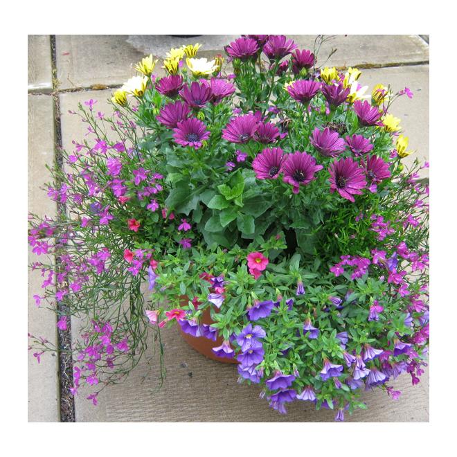 Jardinière de patio été, Serres Floraplus, 12 po