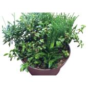 Succulents - 11