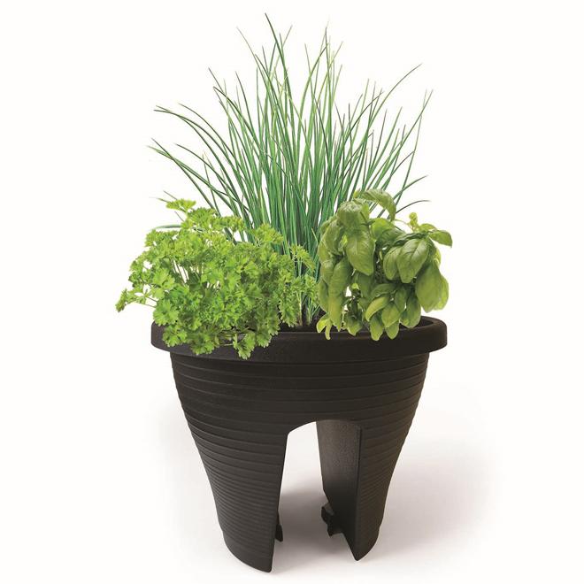 Assorted Fresh Herbs - Round Rail Planter - 12-in