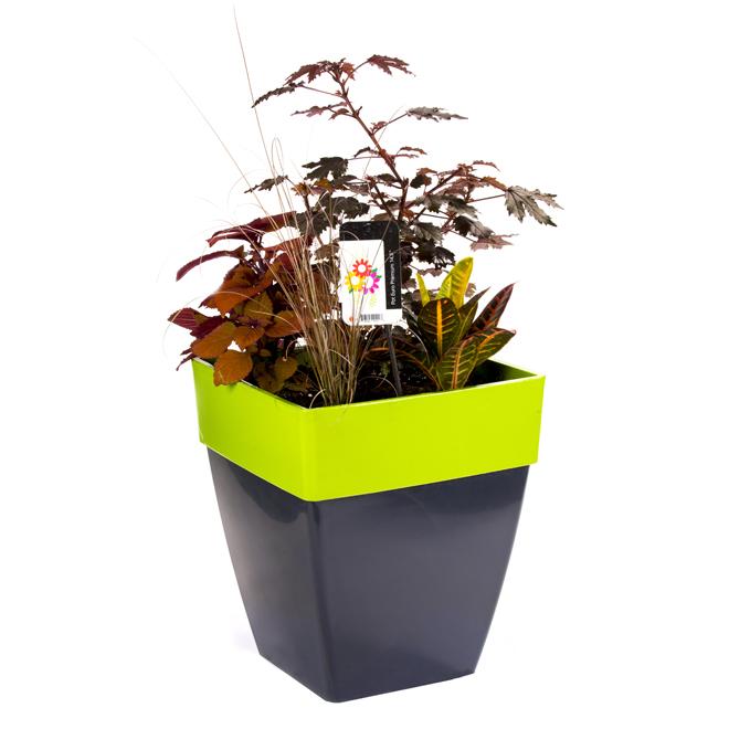 Assorted Patio Planter - Premium Plants - 14.5-in